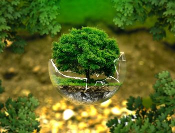 Edukacja ekologiczna w przedszkolu